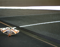 ping-pong butterfly