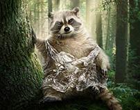 Ecological Raccoon