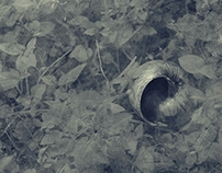 Backyard Mysteries (2)