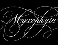 MYXOPHYTA
