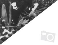 Fotografia | Preto e Branco