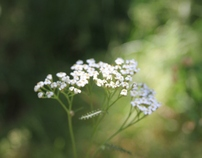 Fotografias de Flora Silvestre / Wild Flora Photographs