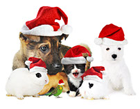 Pet Valu Holiday Radio