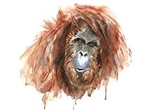No. 10 Orangutan
