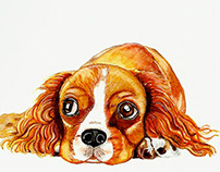 "Dog Portrait : ""English Cocker Spaniel """