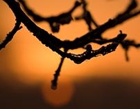 Branch in the sunrise