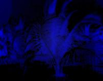 blue palm