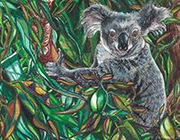 Koala Pause