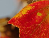 Otoño / Autumn