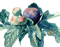 "Watercolor patterns ""Summer Figs"""