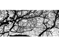 Treeline Triptychs