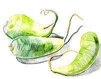 Fruit and veg X (корнеплоды)