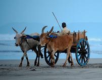 Beach, Maharashtra, India VOL. 3