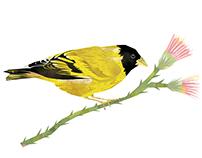 Aves de Buenos Aires
