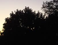 Mañana, luz y amanecer