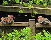 Collection of birds - Saint James's park