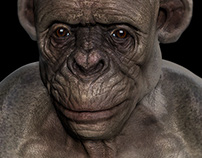 Bald Ape