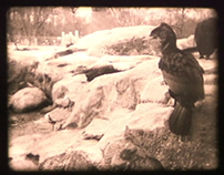 The Maryland Zoo in 16 mm