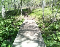 2012 May 6 -Walk in Kains Woods, London, Ontario