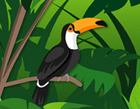 Toucan Animation