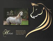 AL ASAYIL Catalogue