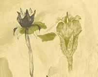 Imaginary Botany