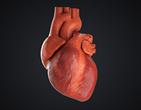 C4D Heart Beat - Cinema 4D Tutorial (Free Project) ⭐