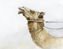 """""""Верблюжьи бега"""""""