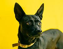 2017FJU Doggy Club 募資計畫攝影