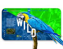 Parrots web design