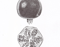 Stippling - Pomegranate