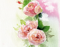 Watercolor English roses. Illustration & patterns.