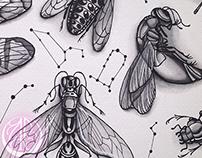 ANIMALIA - Insects & Stars ♡
