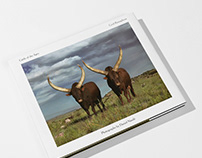 Cattle of the Ages   Cyril Ramaphosa & Daniel Naudé