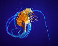 The Ocean in Motion: Jellies at the Mystic Aquarium