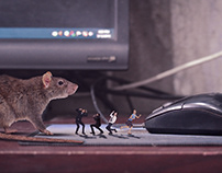 Mouse Meet With Mouse