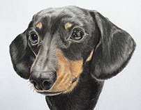 Sidney - Black and Tan Miniature Dachshund