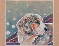 Aussie/Beagle Puppy