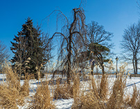 Secret Garden - Rosetta McClain Park in Winter