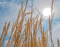 Grain of Sun