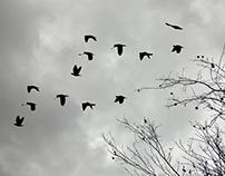 Liberdade de inverno. Foto e edição.