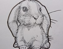 Rabbit. Illustration