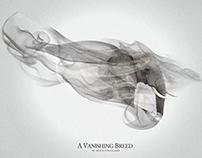 A Vanishing Breed