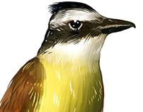 Birds Illustrations (