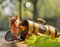 Yorkshire Terrier 2