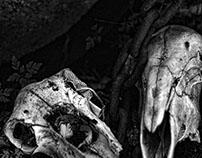 Skulls In Naturtal Light