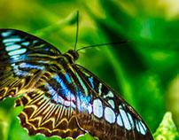 butterfly -