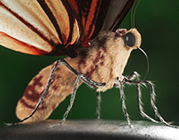CGI Butterfly