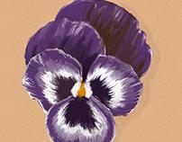 Viola - Digital 'Oil Painting'