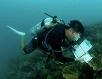 Career Opportunities in Marine Biology - Blog